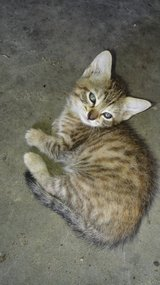 Sweet kittens to a good home in Fort Polk, Louisiana