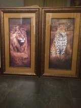 2 nice framed pictures Afrika Lion in Ramstein, Germany