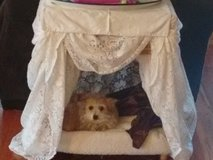 Pet Lace Canopy Bed in Aurora, Illinois