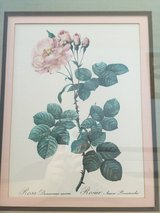 """Rosier Aurore Poniatowska, from La Couronne Des Roses"" Framed Art Print in Camp Lejeune, North Carolina"