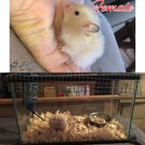 Hamsters & Cages in Leesville, Louisiana