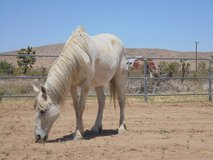 Barn Stalls Available! (Dogs and cats boarded too!) in 29 Palms, California