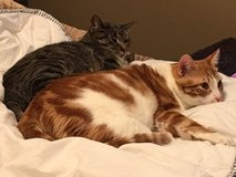 Male and Female cats in Fort Leavenworth, Kansas