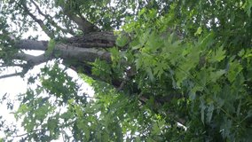 Large tree limb cut/take wood in Clarksville, Tennessee