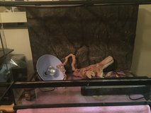 Reptile tank with lights in Lockport, Illinois