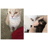 Free Indoor Cats in Fort Campbell, Kentucky