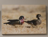 Wood Duck Pair 16X20 Canvas Gallery Wrap. in Cherry Point, North Carolina