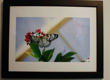 Paper Kite Butterfly Photograph 20x24 Framed. $50 in Cherry Point, North Carolina