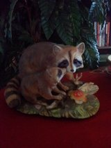 Limited Edition Ringtail Raccoons 1978 in Camp Lejeune, North Carolina