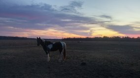 Western Riding lessons/training and therapy riding in Camp Lejeune, North Carolina