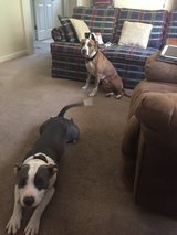 Good Home Needed for one or two dogs in Beaufort, South Carolina