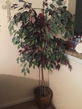 Fake Ficus Tree plant in Sugar Land, Texas