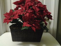 *REDUCED* Poinsettia Arrangement in Wicker Container in Eglin AFB, Florida