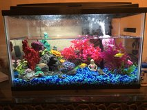 Fish Tank For Sale with 4 Freshwater Fish in Beaufort, South Carolina