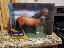 Bryer Horse in Conroe, Texas