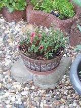 pot with flowers in Ramstein, Germany