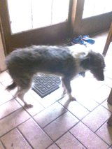 Mixed male dog needs your help! please!! in Lake Charles, Louisiana