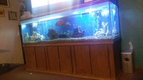 250 gal fish tank with fish and accessories in Lawton, Oklahoma