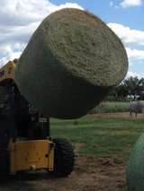 Top Quality Fresh /Dry Hay for animals.... in Los Angeles, California