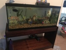 55 gallon tank with everything in Camp Lejeune, North Carolina
