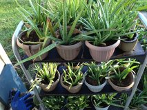ALOES,ALOES,ALOES in Biloxi, Mississippi