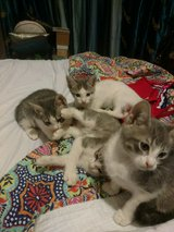 cute kittens in Kingwood, Texas