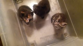 Kittens need home in Beaufort, South Carolina