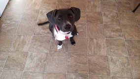 1 Yr Old Mix Female dog**very energetic*** in Leesville, Louisiana