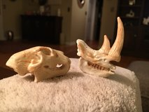 Dino Skulls in Wheaton, Illinois