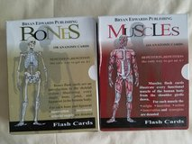 Muscle and Bones flashcards in Byron, Georgia