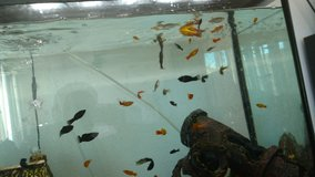 Free Fish to a Good Home in Nellis AFB, Nevada