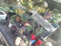 Plants varieties for sale in Beaufort, South Carolina