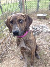 Female Dog in Leesville, Louisiana