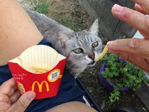mc donal cat ftagH in Okinawa, Japan