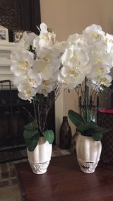Orchid vaces in Beaufort, South Carolina