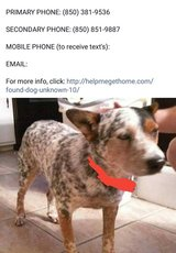 Lost Dog in San Angelo, Texas
