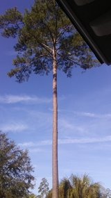 Tiny lawn and tree service in Beaufort, South Carolina