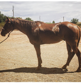 10 year old goat horse in Alamogordo, New Mexico