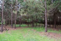 7 Acres for Sale in St. Helena in Beaufort, South Carolina