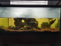 Fish Tank W/ Fish and Turtle in Kingwood, Texas