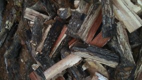 seasoning oak and hickory firewood in Beaufort, South Carolina