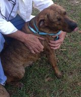 Small rescue looking for Foster's and forever homes for four legged babies in Lumberton, North Carolina
