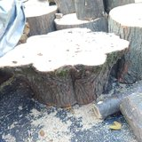 Tree stumps & wood in Yorkville, Illinois
