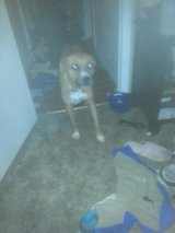 Dog free to good home in Bartlett, Illinois
