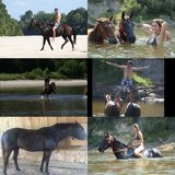 16 year old black mare in Lake Charles, Louisiana