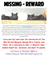 Missing our Larry Cat in 29 Palms, California