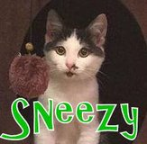 Sneezy is looking for a home! in Okinawa, Japan