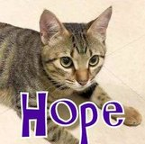 Hope needs a home today! in Okinawa, Japan