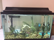 30 Gallon Fish tank with Fish in Bellaire, Texas