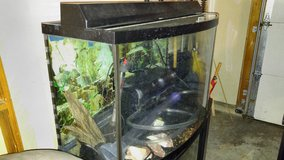 40 Gallon Fish Tank with filtration, lamp, heater, stand, etc.  Everything needed. in Elgin, Illinois